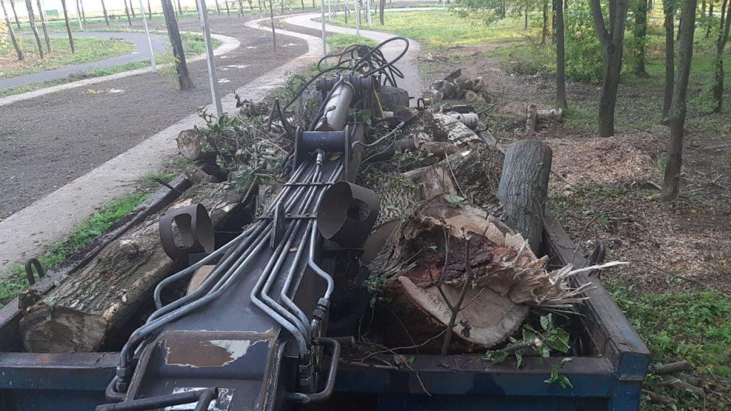 Вывезем деревья, пни, ветки, кусты с вашего объекта или дачного участка.
